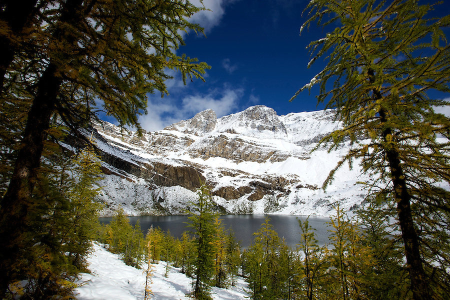 Hidden lake et mélèzes sur le chemin du Skoki lodge.