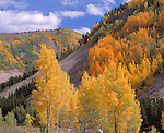 Fall-colored aspen above Lime Creek, San Juan Nat'l Forest, CO