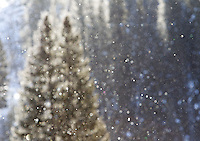 A light flurry of snow crystals falls from a nearby tree on a sunny winter day.