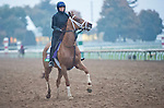 October 24, 2015 :   Red Rifle, trained by Todd A. Pletcher and owned by Twin Creeks Racing Stable LLC, exercises in preparation for the Longines Breeders' Cup Turf at Keeneland Race Track in Lexington, Kentucky on October 24, 2015. Scott Serio/ESW/CSM