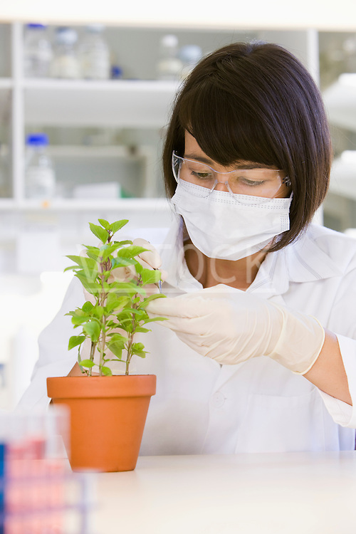 Female scientist doing research with plant in laboratory