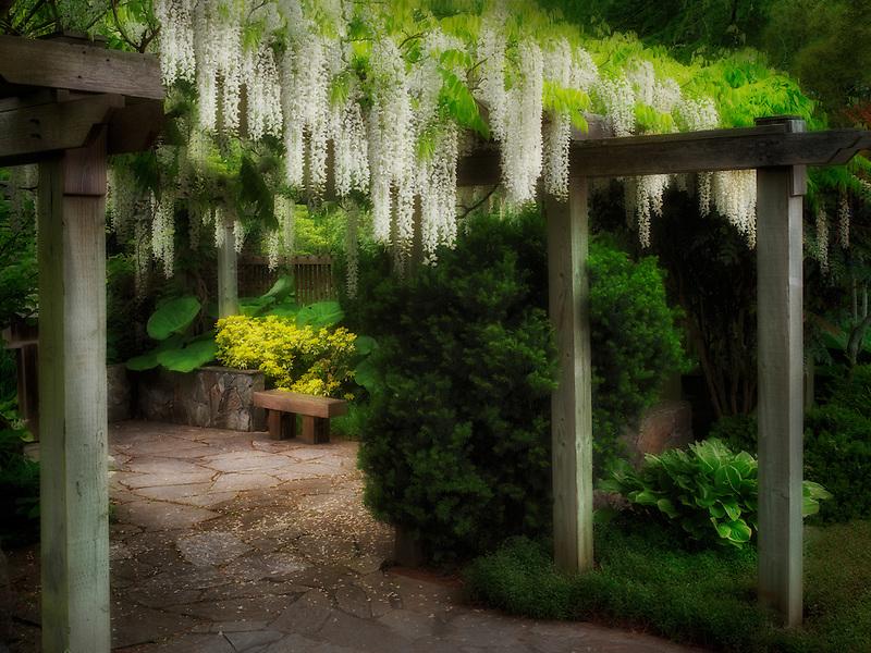 Wisteria trellis. The Oregon Garden. Silverton, Oregon