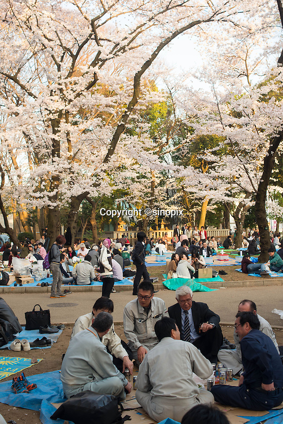 Cherry Blossom drinking party at Ueno Park in Tokyo, Japan