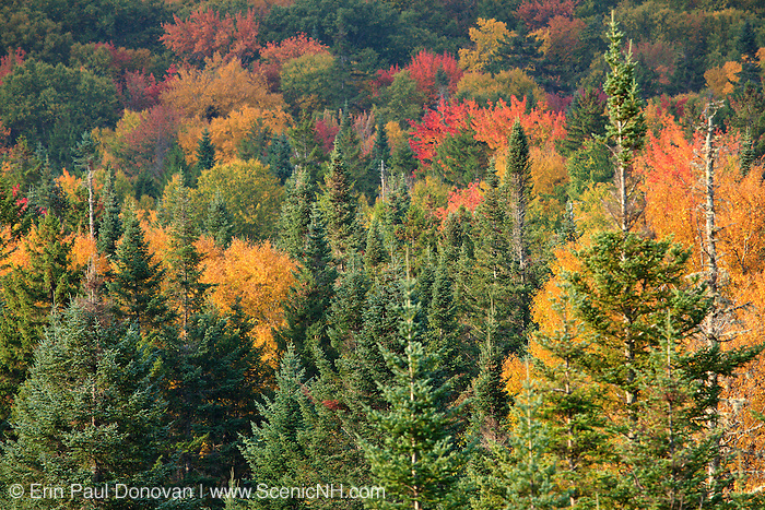Autumn foliage along Route 302 in  Carroll, New Hampshire USA