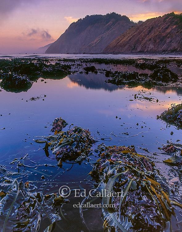 Dawn, Tidepool, Jones Beach, Sinkyone Wilderness State Park, Lost Coast, Mendocino County, California