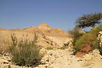 Wadi Mishmar in the Judean desert