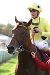 October 02, 2016, Chantilly, FRANCE - Postponed with Andrea Atzeni up at the Qatar Prix de'l Arc de Triomphe (Gr. I) at  Chantilly Race Course  [Copyright (c) Sandra Scherning/Eclipse Sportswire)
