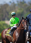 """September 26, 2015: Rare Candy in the post parade for the Breeders' Cup """"Win and You're In"""" FrontRunner Stakes at Santa Anita Park in Arcadia, California. Zoe Metz/ESW/CSM"""