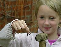 Mädchen im Schulgarten mit einem , Gartenarbeit, Lumbricus spec., earthworm, lob worm, dew worm