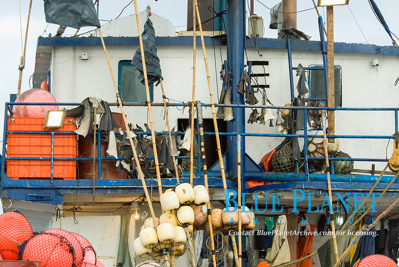 Shark fins hanging from illegal fishing boat at Roca Partida in the Revillagigedos Archipelago in Mexico, Pacific Ocean