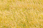 Grassland, Kruger National Park, South Africa
