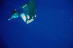 Delphine Legay On Deep Dive