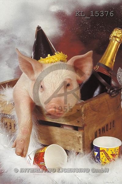 Interlitho, Alberto, ANIMALS, pigs, photos, pig, party(KL15376,#A#) Schweine, cerdos