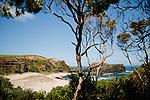 Image Ref: CA966<br /> Location: Bushrangers Bay Track<br /> Date of Shot: 28.09.19