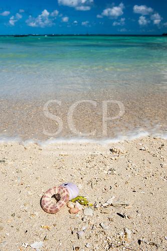 Ile au Cerfs, Mauritius. Turquoise sea, white sand and shells.