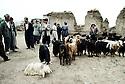 Iraq 1992  In Halabja in ruins, the animal market   Irak 199é   Dans Halabja en ruines, le marché des animaux