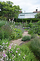 Gravel path at top of Cherry Tree Garden, Fairlight End, Pett, East Sussex, late June. Planting includes Nicotiana, Nepeta, Euphorbia and Foxgloves.