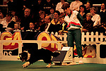 'CRUFTS', FLYBALL COMPETITION., 1991