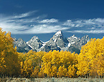 The Grand Teton and autumn Aspen trees, Jackson Hole, Wyoming, USA. John offers private photo tours in Grand Teton National Park and throughout Wyoming and Colorado. Year-round.