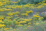 Wildflowers, Cappadocia, Turkey
