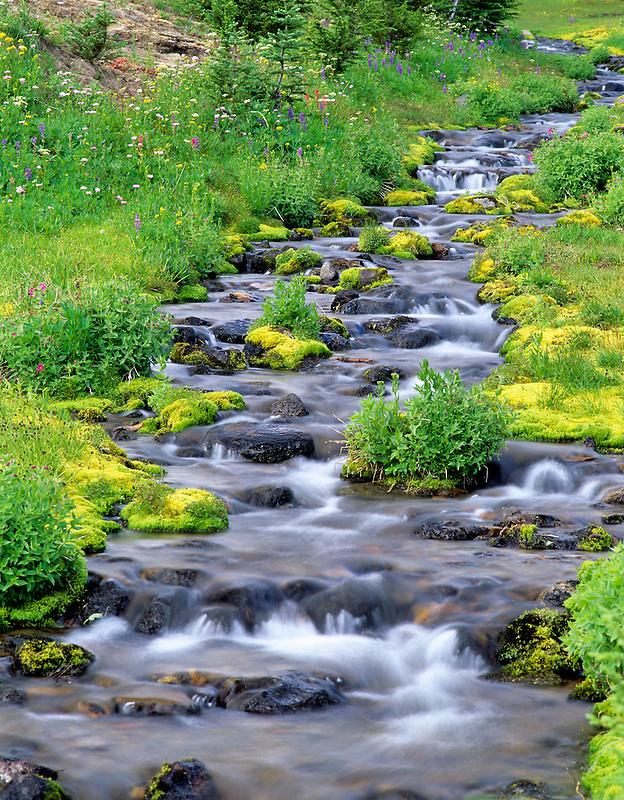 Mossy Crooked Creek. Bird Creek Meadows, Washington