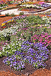 DISPLAY OF ANNUALS BY AMERICAN TAKII