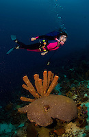 22 August 2004: Scuba diver Sally Herschorn glides over a grouping of tube sponges and brain coral at La Machaca Reef, on the Dutch island of Bonaire, in the Netherland Antilles. Used Aquatica D100 housing, 8 inch dome port and extension ring with twin Ikelite 225 strobes 1/4 power manual setting...Mandatory Photo Credit: Ed Wolfstein Photo