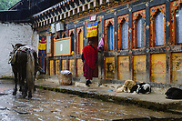 Buddhist monk going about his daily duties in the pouring rain at Tango Goemba. The horse transports food and other supplies up the steep mountain to the monastery, meanwhile the sleeping dogs shelter from the rain.