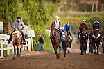 October 20, 2018 : Ax Man comes off the track at Santa Anita Park on October 20, 2018 in Arcadia, California. Evers/ESW/CSM