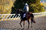 November 2, 2020: Blame The Booze, trained by trainer Wesley A. Ward, exercises in preparation for the Breeders' Cup Juvenile Turf Sprint at  Keeneland Racetrack in Lexington, Kentucky on November 2, 2020. Alex Evers/Eclipse Sportswire/Breeders Cup