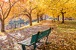 Fall foliage on the Charles River Esplanade, Boston, MA, USA