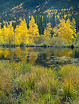 San Isabel National Forest, Colorado:<br /> Beaver pond with aspen in fall on Cottonwood Pass