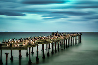 Old pier with Imperial and Rock Cormorants in Punta Arenas, Chile