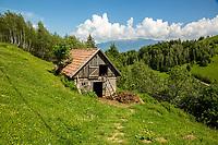 Transylvania Jun17
