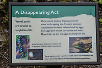 Cranberry Hill, West Virginia. Explanatory Sign at Vernal Pool.