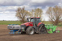 14-4-2021 Planting potatoes  in the Lincolnshire fens<br /> ©Tim Scrivener Photographer 07850 303986<br />      ....Covering Agriculture In The UK....
