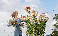 BNPS.co.uk (01202 558833)<br /> Picture: ZacharyCulpin/BNPS<br /> <br /> Horse and flower power...<br /> <br /> Kate White-Hamilton cuts huge Tree Lilies at her flower plot inWest Chelborough in Dorset in preparationforthe Flower Farmers' Big Weekend.<br /> <br /> Flower farmers across the UK invited the public onto their plots for the third successive year of the Flower Farmers' Big Weekend. The weekendoffered flower-lovers the chance to meet and learn from the local, growers of seasonal, scented British cut flowers on their allotments, cutting gardens, walled gardens and farmland. Thenationwide open flower farm festival staged by growers' association.