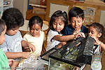 Education Preschool 3-5 year olds group of children feeding pill worms in classroom horizontal