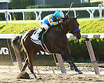 June 6 2015:  American Pharoah with Victor Espinoza becomes the 12th Triple Crown winner by winning the 147th running of the Grade I Belmont Stakes for 3-year olds, going 1 1/2  mile at Belmont Park.  Trainer Bob Baffert. Owner Zayat Stables LLC . Sue Kawczynski/ESW/CSM