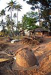 Rural scene near Candolim in Goa in India.