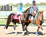 """Film Making post parade. Point of Entry with John Velazquez wins the 30th running of the Kitten's Joy Gulfstream Turf Handicap (Grade 1) for 4-year olds & up, going 1 1/8 mile on the turf, at Gulfstream Park.  Trainer Claude """"Shug"""" McGaughey III.  Owner Phipps Stable"""