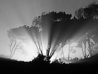 Sunburst  at sunrise through trees at Devil's Punchbowl State Natural Area. Oregon