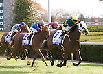 23 October 2009 The Pin Oak Valley View 1st Division (GRIII),  Bluegrass Princess and John Velazquez overcome a full field of 12, to take the 1st of 2 divisions of this GRIII race.