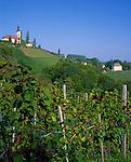 Austria, Styria, Kitzeck: wine-growing estate at Sausal Wine Toure
