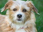 Expressive mutt dog.