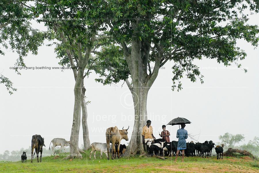 INDIEN Westbengalen , Dorf Gandhiji Songha Hirten suchen Schutz vor Monsunregen / INDIA Westbengal village Gandhiji Songha, shepherd and cattle under tree during Monsoon rain