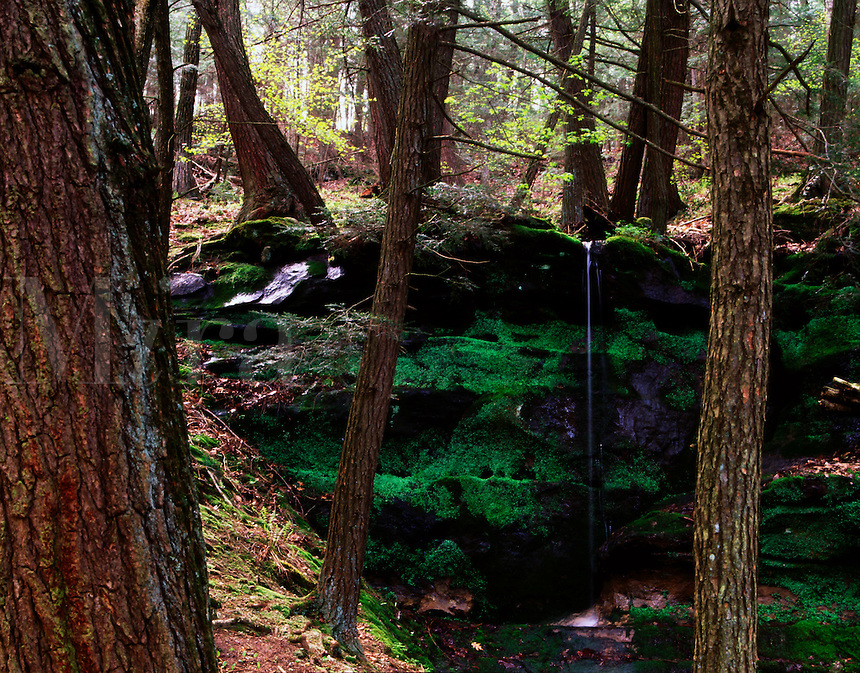 Seasonal waterfall in hemlock forest Hemlock Draw Preserve Baraboo Hills Wisconsin