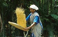 INDIA Karnataka Taccode, woman separate rice grain from chaff at a farm near Mangalore / INDIEN Frau trennt das Reiskorn von der Spreu auf einem Bauernhof