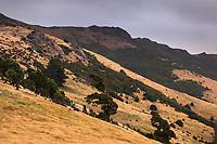 Farmland near Akaroa on Banks Peninsula at twilight, Banks Peninsula, Canterbury, South Island, New Zealand