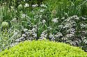 Anthriscus sylvestris 'Ravenswing', The M&G Centenary Garden – 'Windows through Time' - a celebration of 100 years of Chelsea garden design, designed by Roger Platts, Gold medal winner, RHS Chelsea Flower Show 2013.